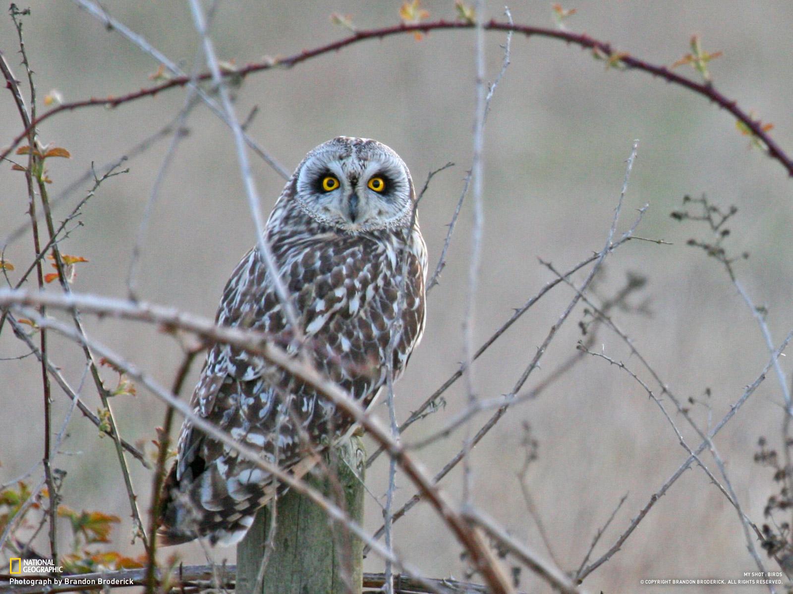 Bird Wallpapers - The BackYard Naturalist | The BackYard ...