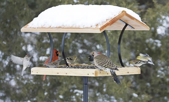 Tips on Winter Bird Feeding  The BackYard Naturalist  The BackYard