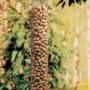Peanut Feeder for Birds
